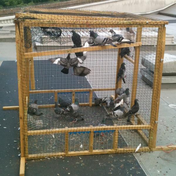 Bespoke Pigeon Trap